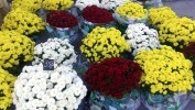 Ponuda prigodnog cvijeća u Nasadima