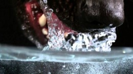 Pas pije vodu