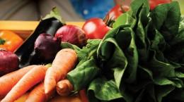 Povrće, eko uzgoj