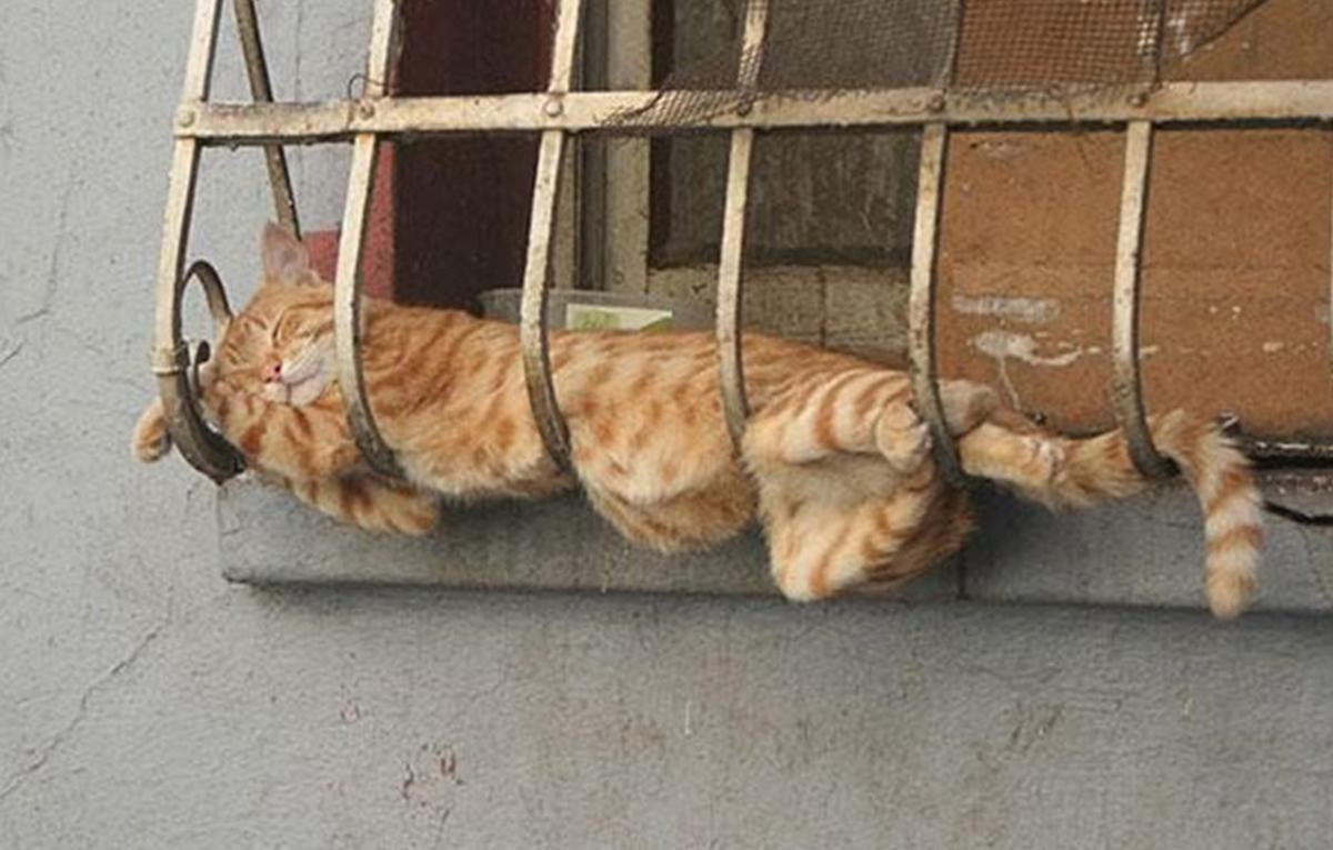 Ukazivanje maca