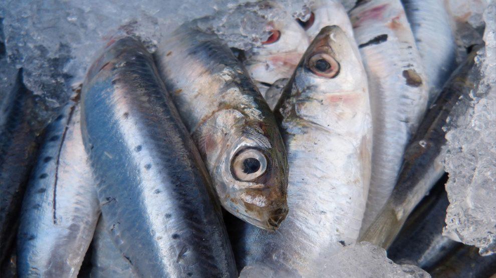 web stranice za pronalazak riba