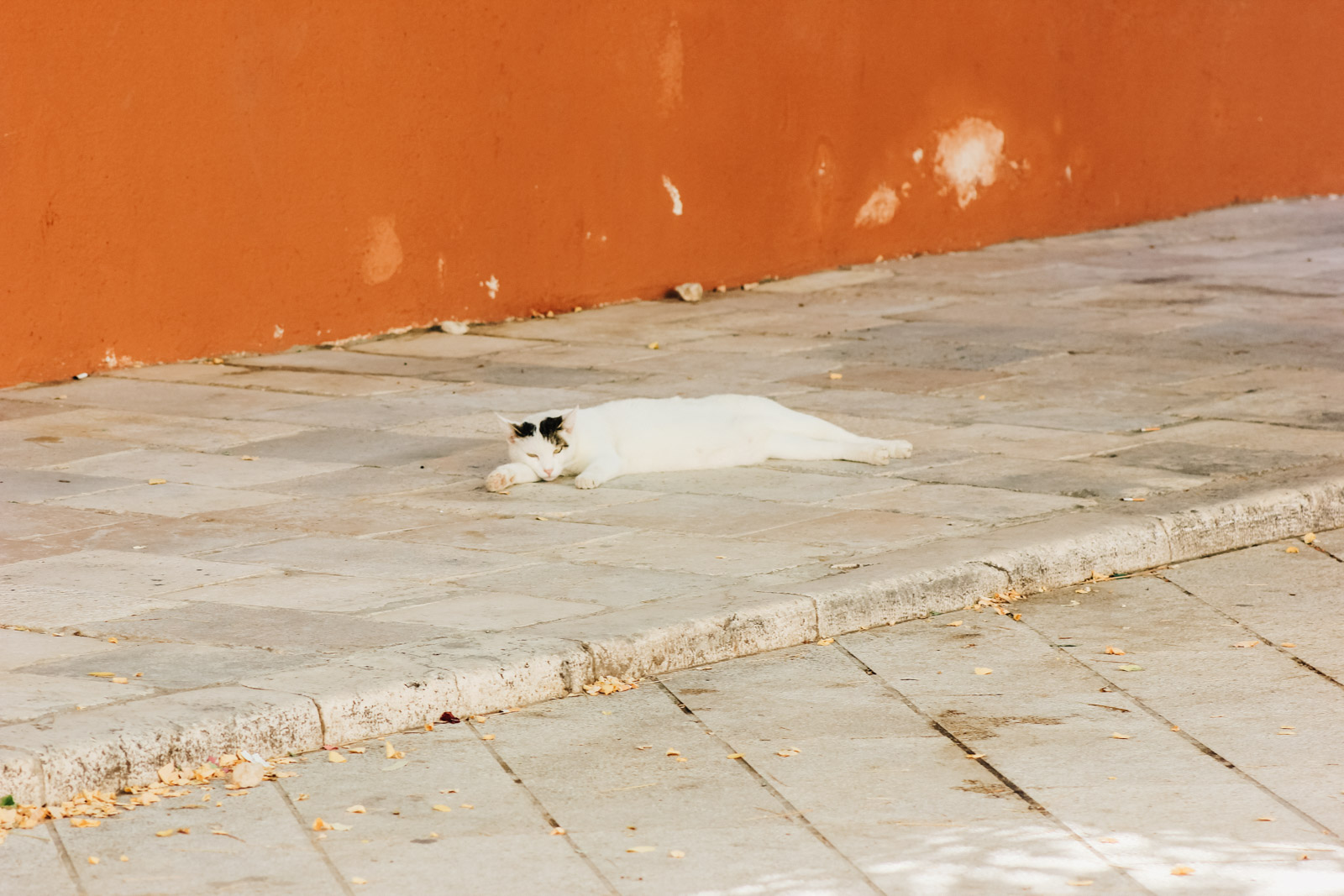Tamna mokra maca
